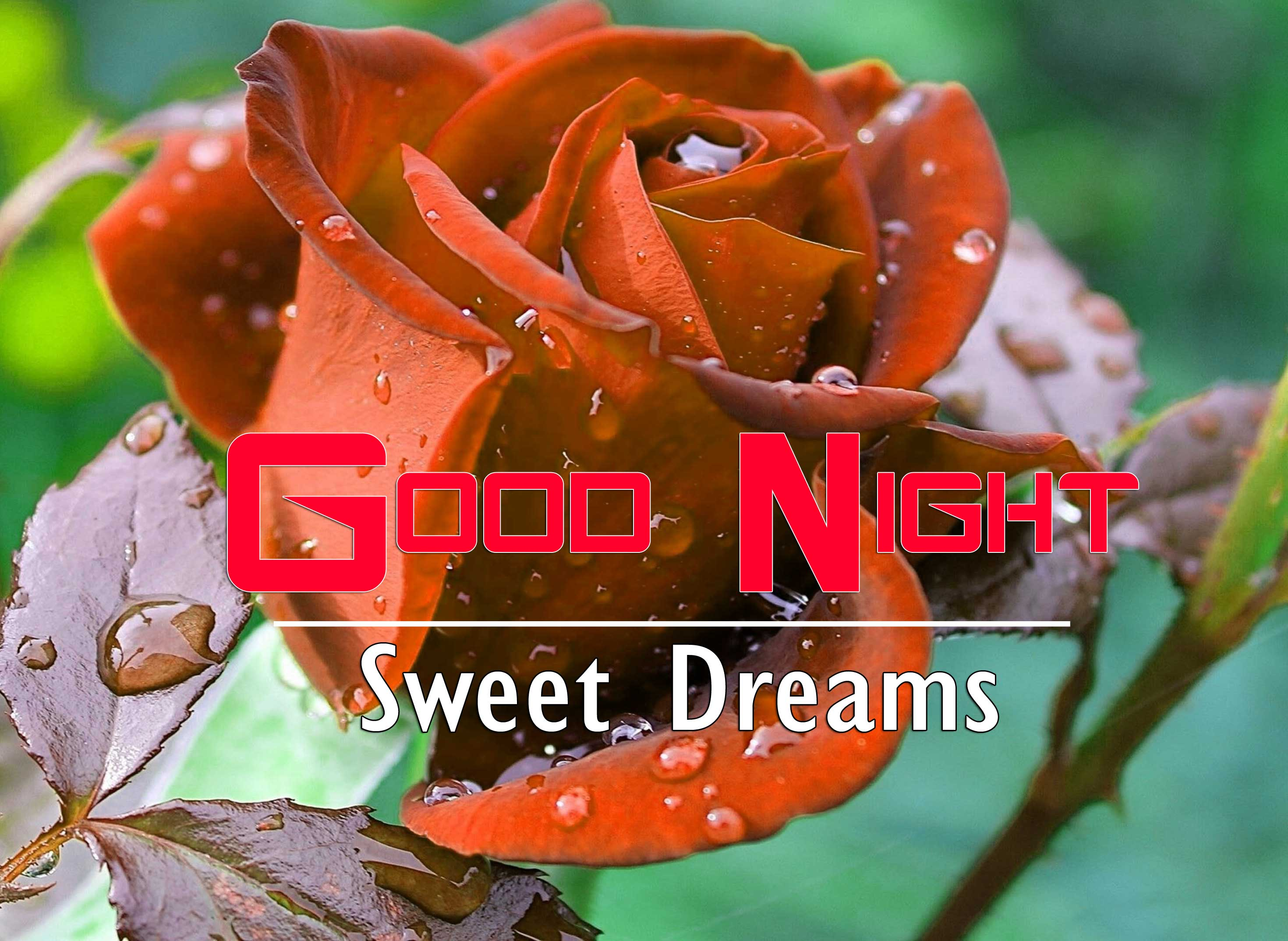 Red Rose Free Full HD Good Night Pics Images