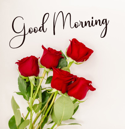 Red Rose Full HD Good Morning Images Free Download