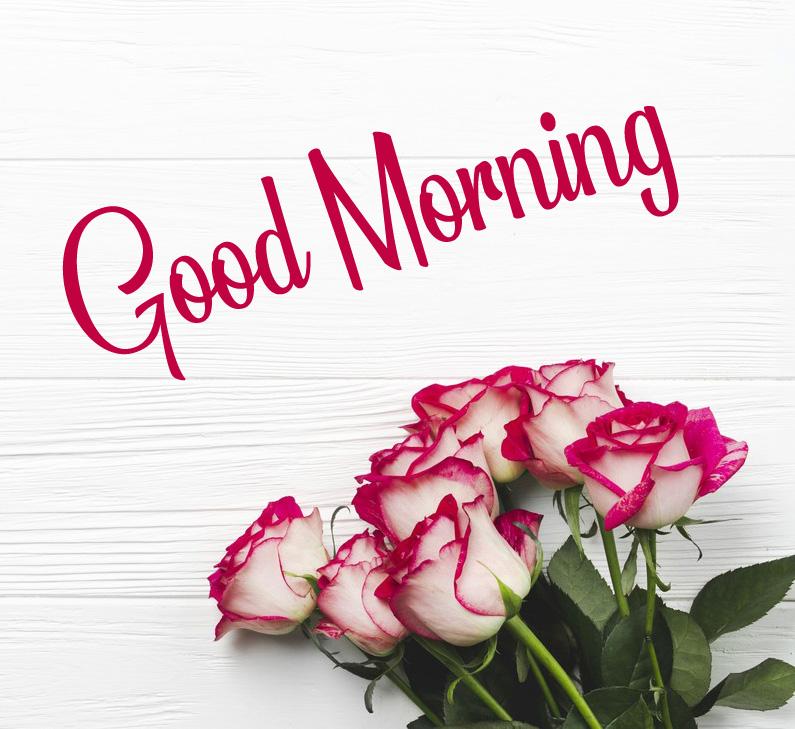 Rose 4k Good Morning Images Pics Download