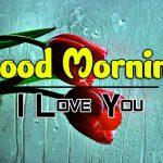 Rose Free 4k Ultra HD Good Morning Images Download