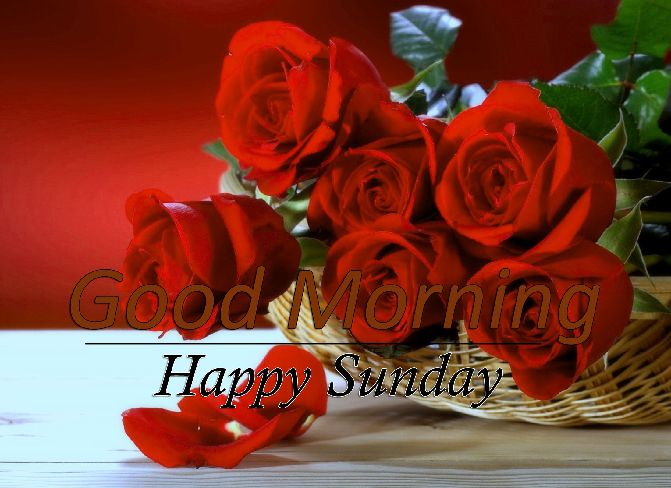 Rose Free Flower 4k Good Morning Pics Images Download