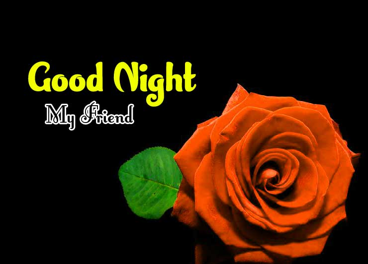 Rose Full HD Good Night Pics Images
