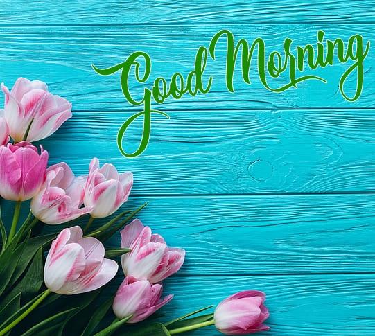 Rose Good Morning Pics Download