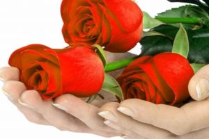 Flower Whatsapp Dp Profile Images Download