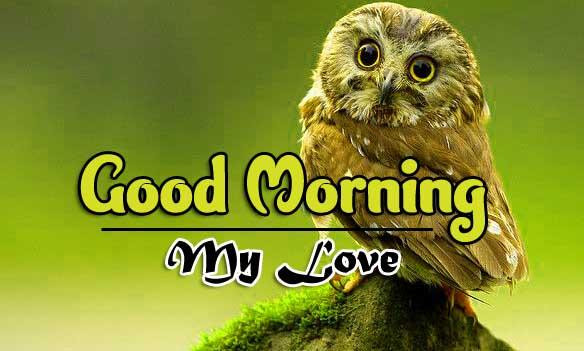Wonderful Good Morning 4k Wallpaper Download 2