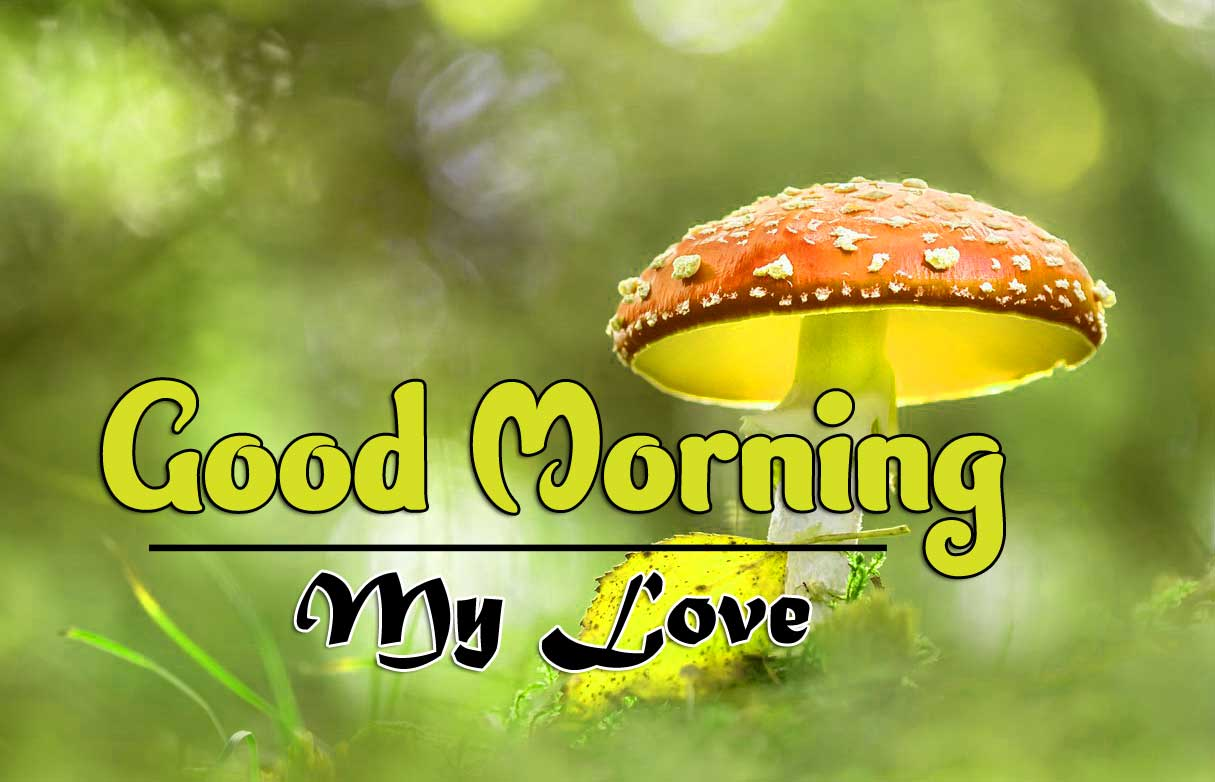 Wonderful Good Morning 4k photo Download 3