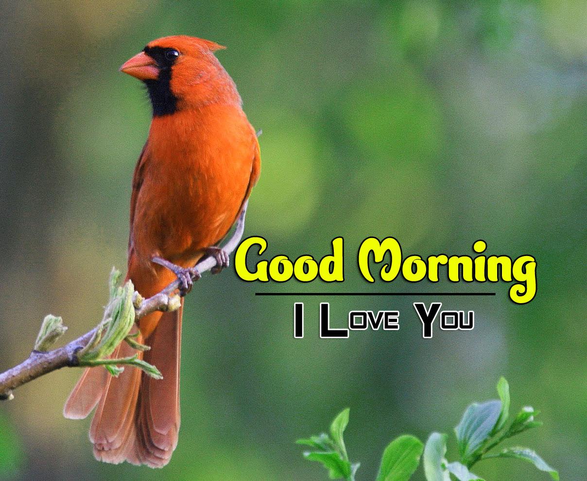 beautiful bird good morning images pics hd