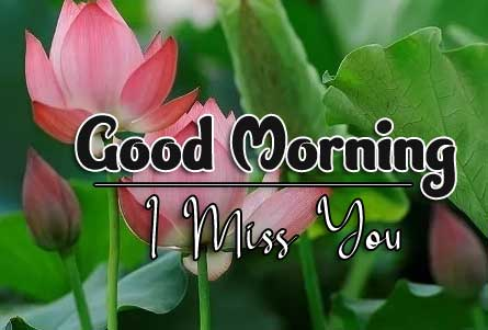 beautiful flower good morning images pics hd