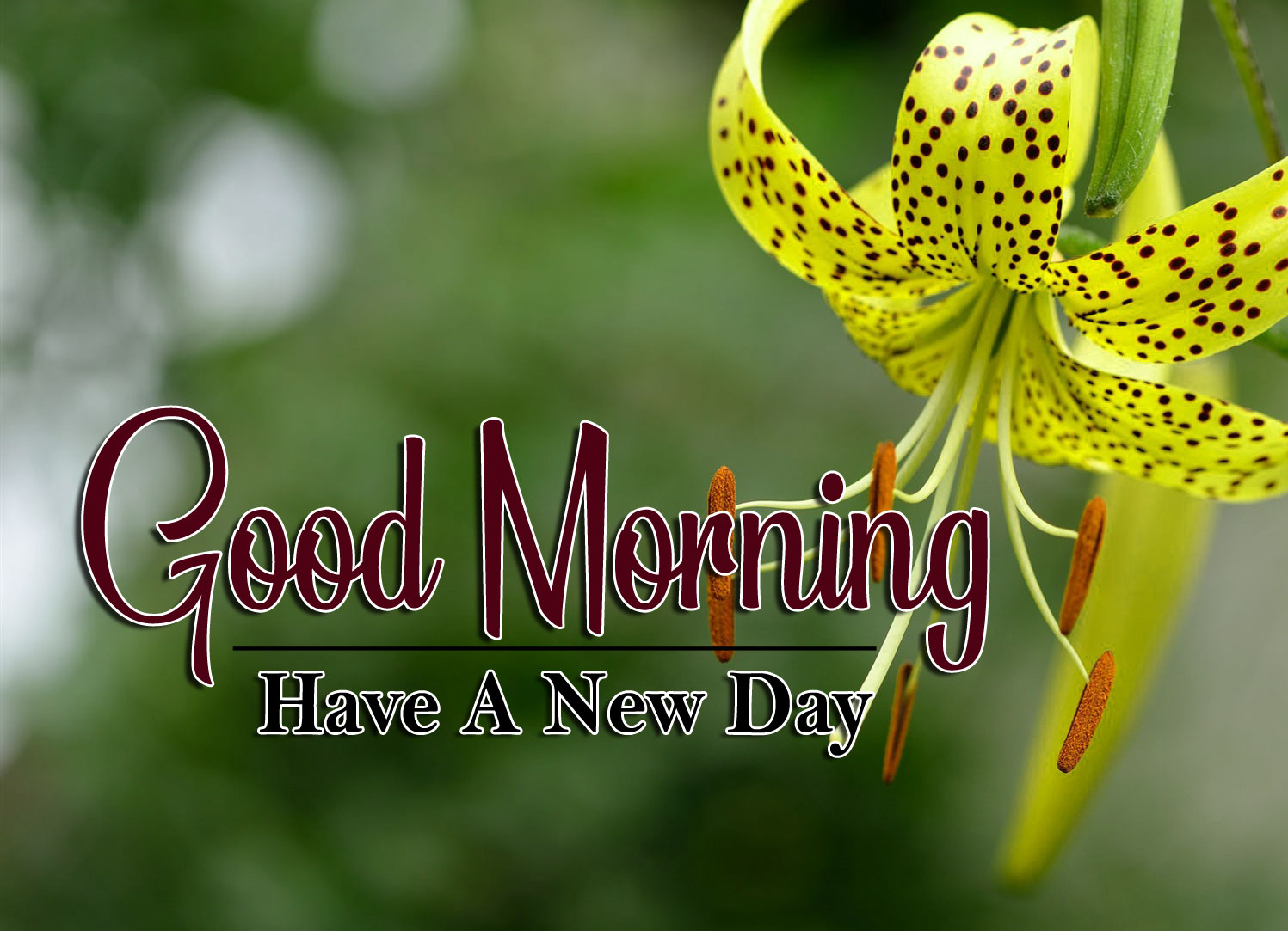 beautiful flower good morning images pictures pics hd download