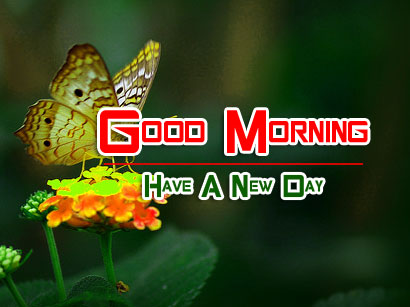 beautiful good morning images pictures free hd