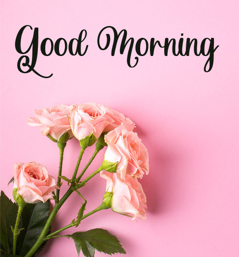 beautiful good morning images pictures hd 1