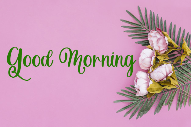 beautiful good morning images wallpaper download 1