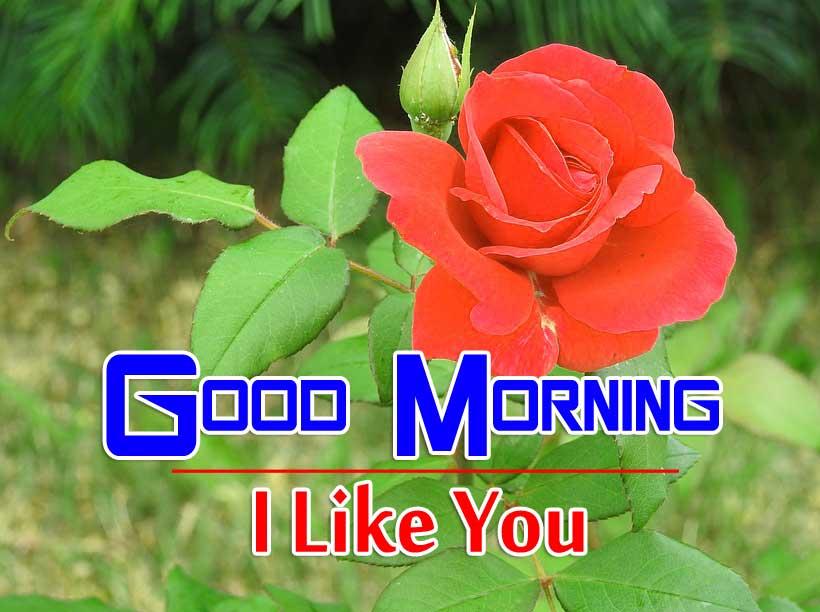 beautiful rose Good Morning Images photo hd download