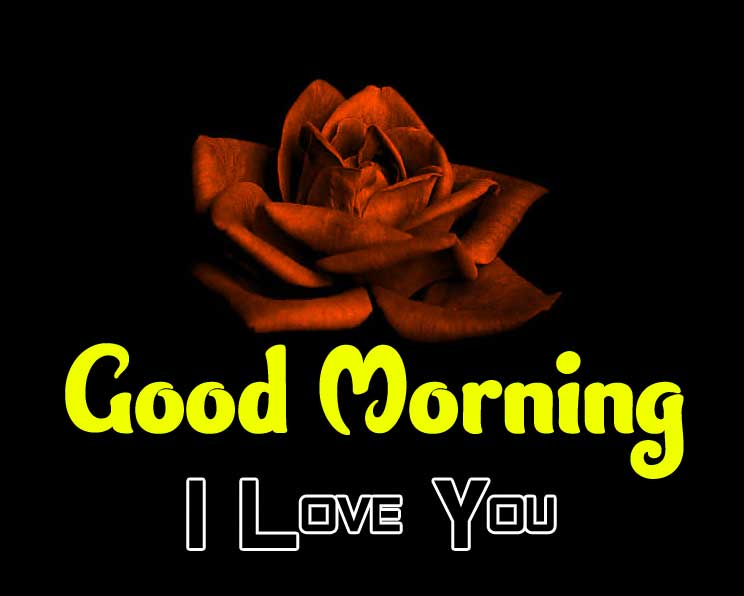 beautiful rose good morning images photo for download