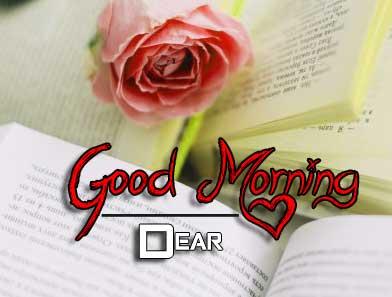 beautiful rose good morning images photo free download