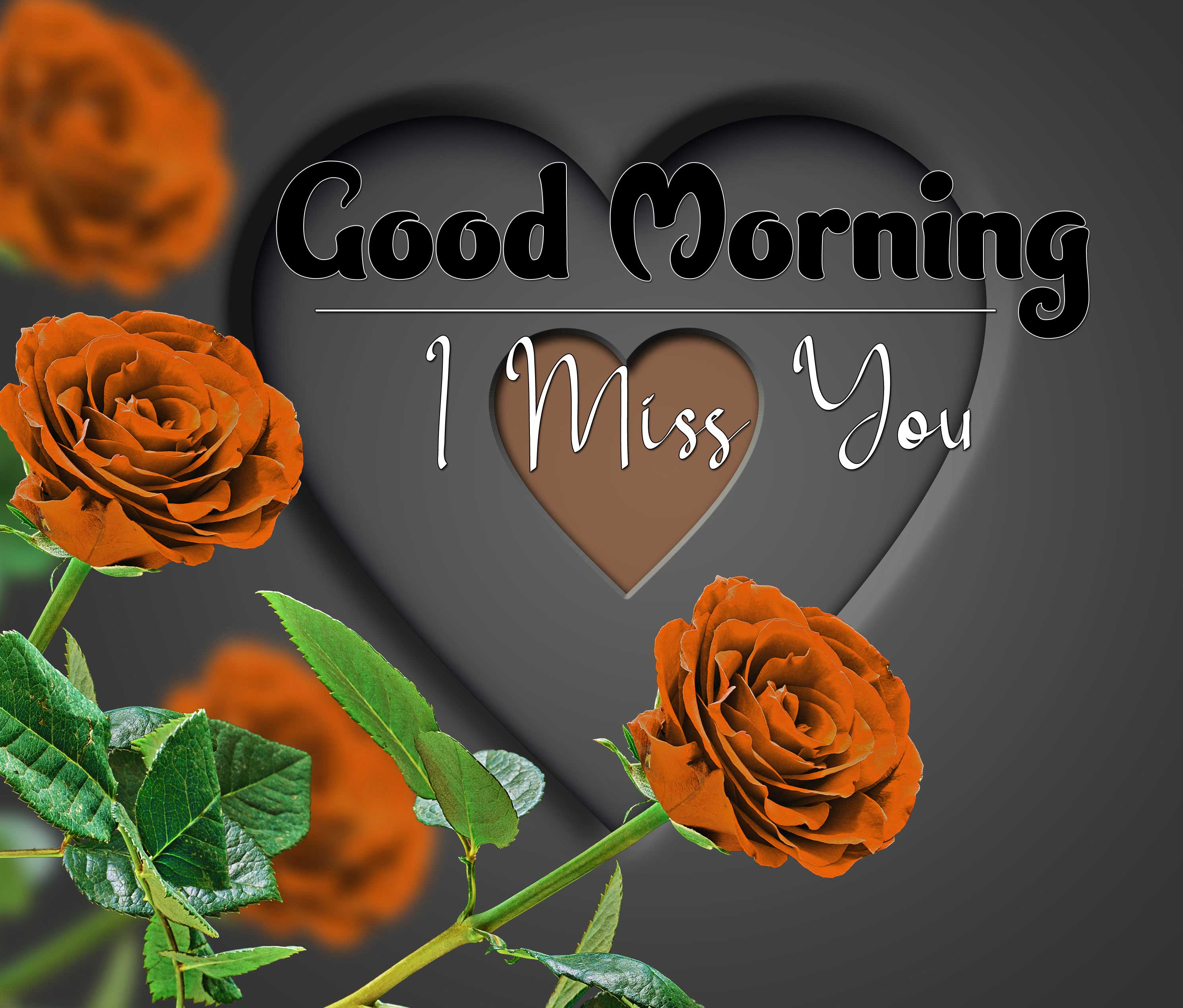 beautiful rose good morning images photo free hd