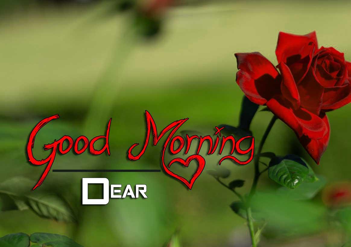 beautiful rose good morning images photo hd