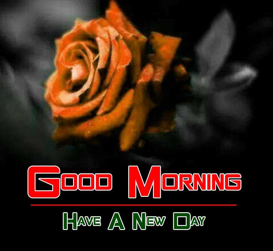 beautiful rose good morning images photo pics hd