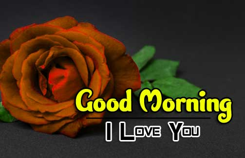 beautiful rose good morning images photo pictures download