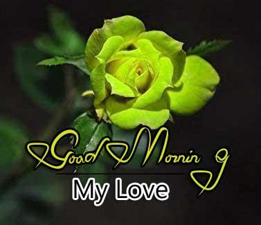 beautiful rose good morning images pics download