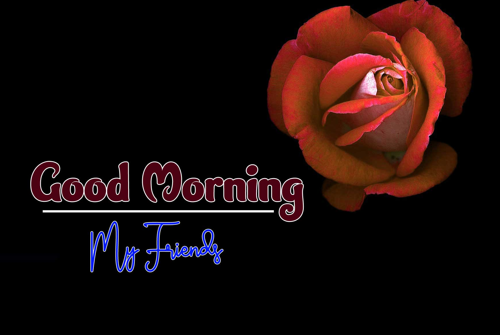 beautiful rose good morning images pics for download
