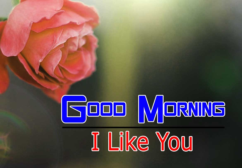 beautiful rose good morning images pics free hd