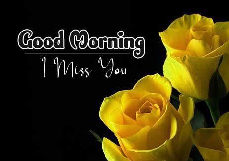 beautiful rose good morning images pics hd