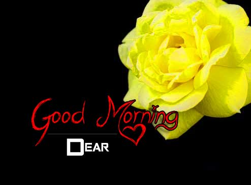 beautiful rose good morning images pictures download