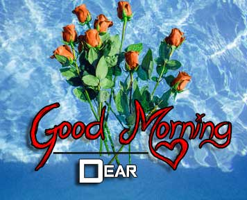 beautiful rose good morning images pictures for hd