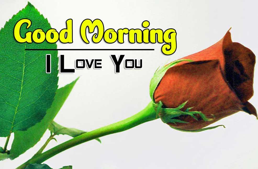 beautiful rose good morning images wallpaper download