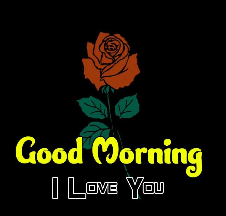 beautiful rose good morning images wallpaper hd