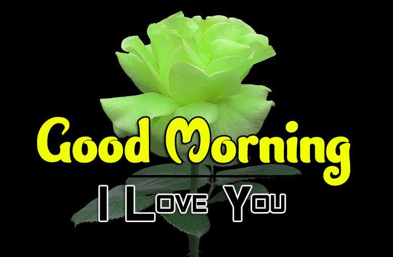beautiful rose good morning images wallpaper photo download
