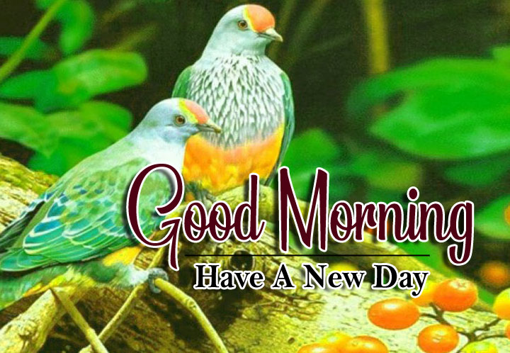 best bird good morning images pictures download