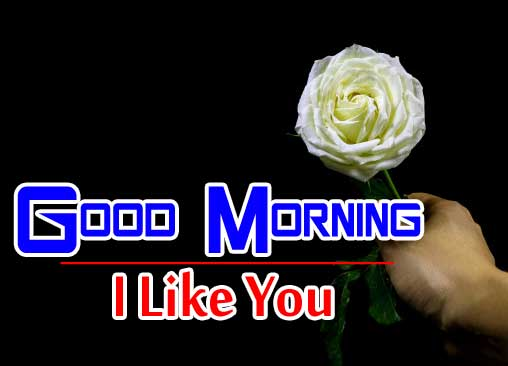 best rose good morning images photo download
