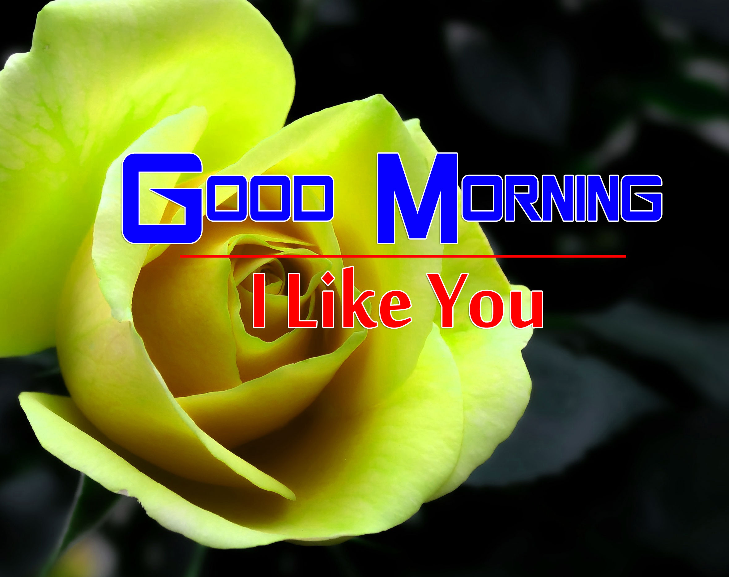 best rose good morning images photo for hd