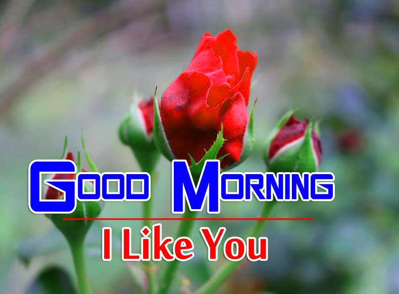 best rose good morning images photo free download