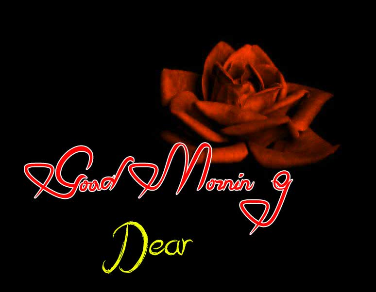 best rose good morning images photo hd