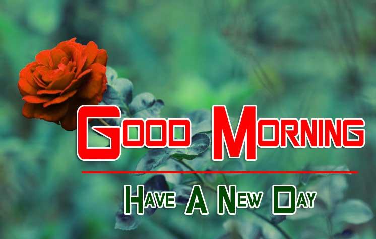 best rose good morning images pics download
