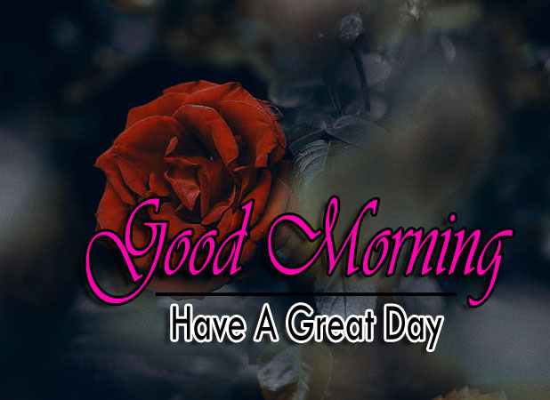 best rose good morning images pics for download