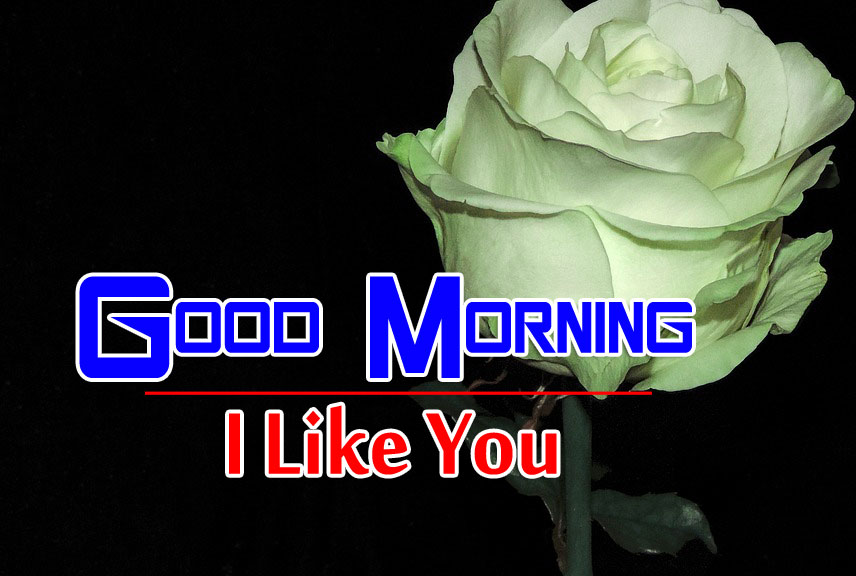 best rose good morning images pics for hd