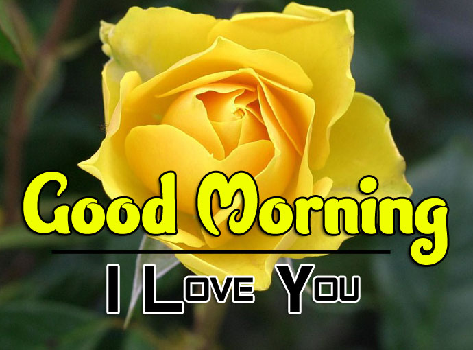 best rose good morning images pics free download