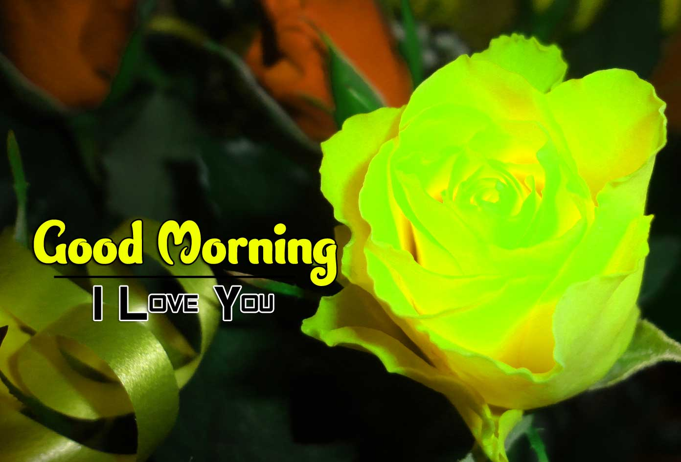 best rose good morning images pics free hd