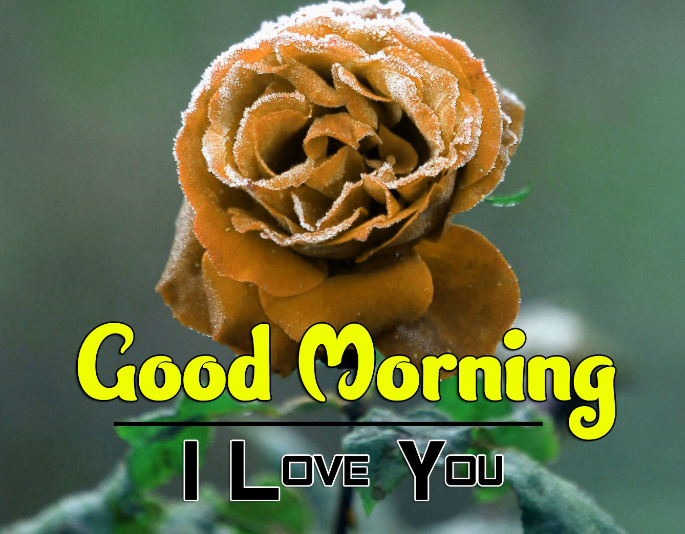 best rose good morning images pictures free hd