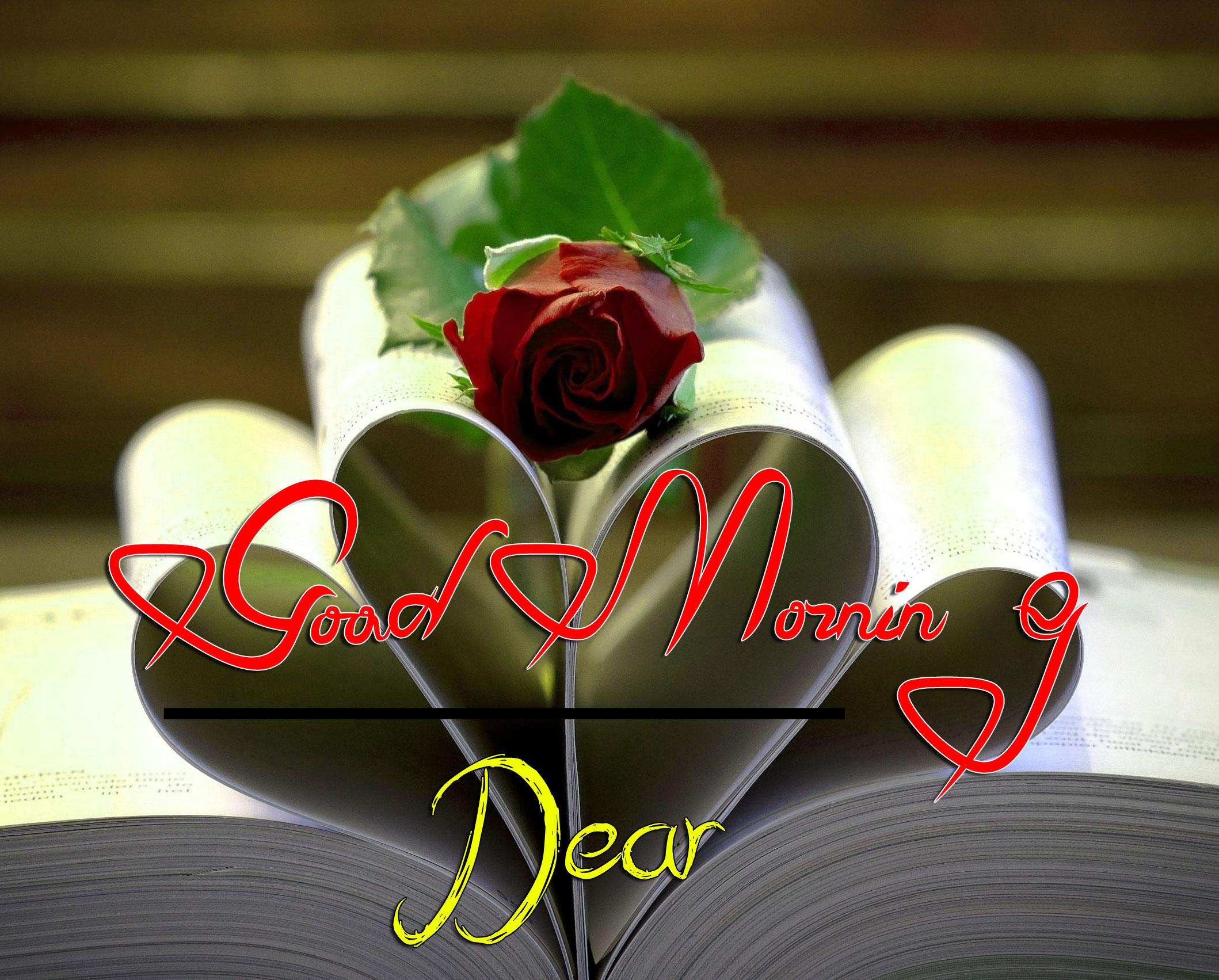 best rose good morning images wallpaper free download