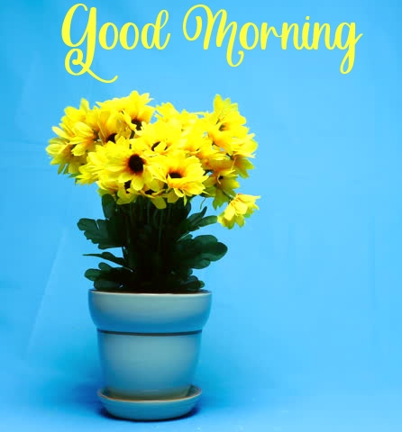 flower good morning images photo pics hd 1