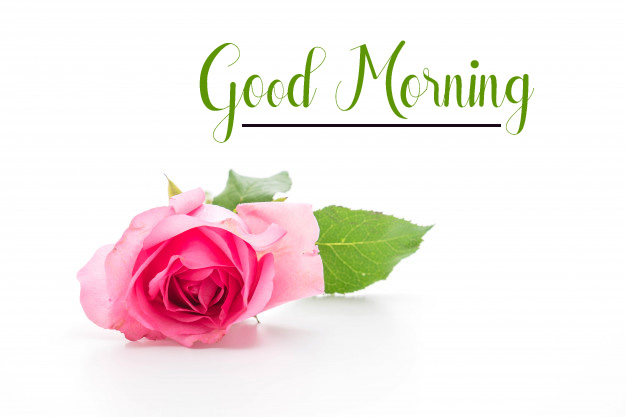 flower good morning images photo pics hd 2