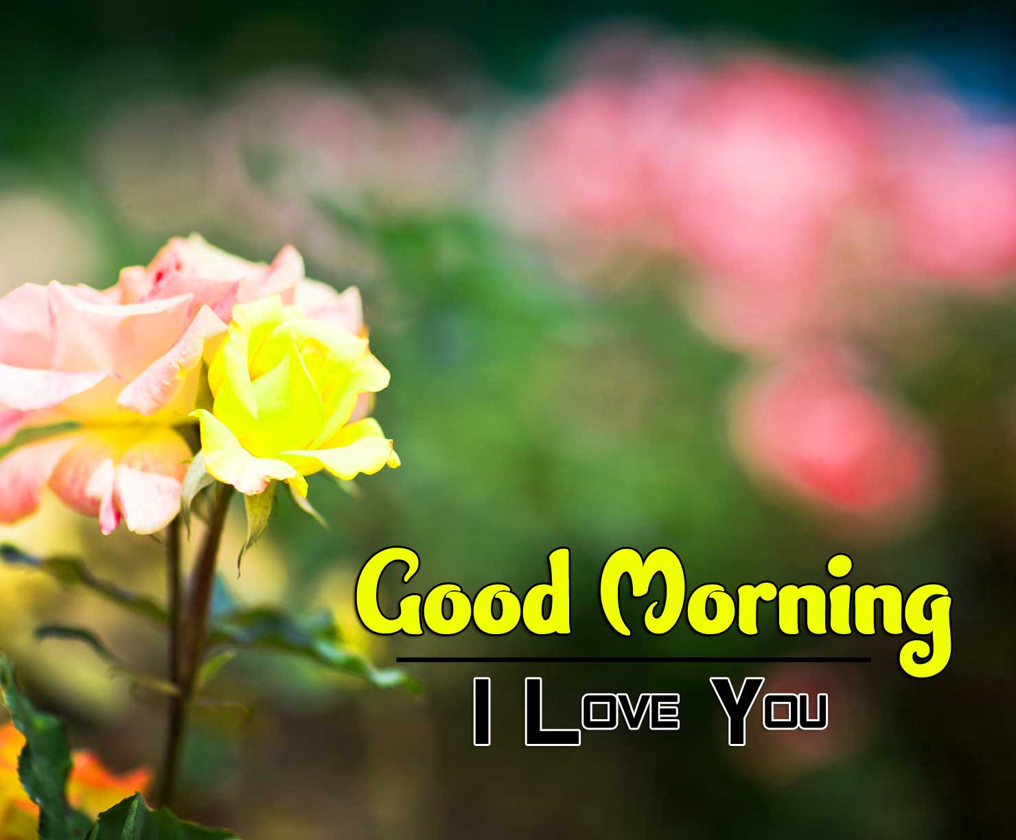 flower good morning images pics for download