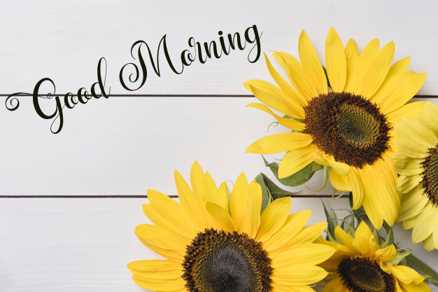 flower good morning images wallpaper download 1