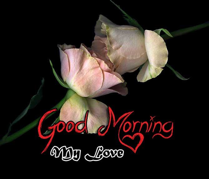flower good morning images wallpaper for hd