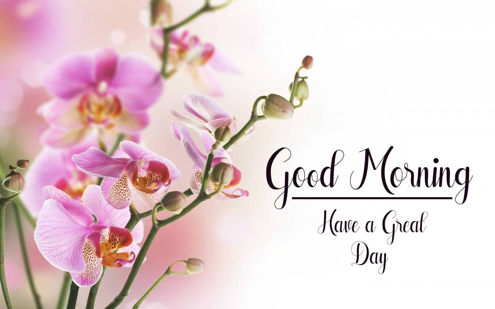 flower good morning images wallpaper free download